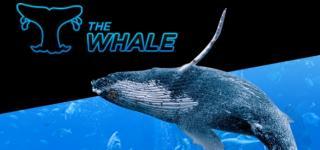 Whale 888