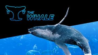 600x338 whale tcm1541 262131 1484036587110 tcm1488 338868
