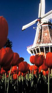 online gambling will be allowed in the netherlands 20 03 2011