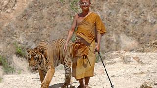 monch tiger