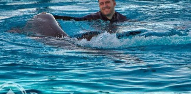 Die mit dem Shark schwimmen