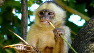 monkey 21072